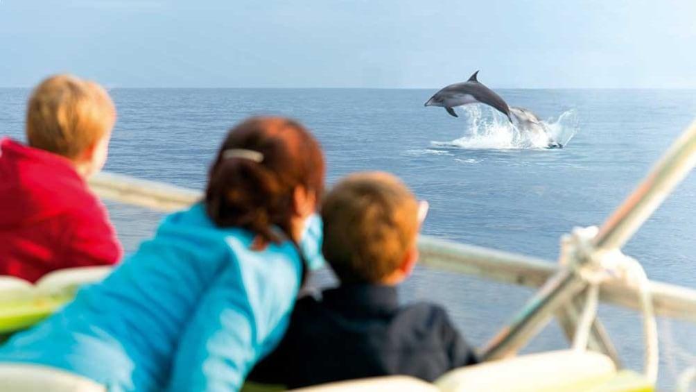 Foto 1 von 5 laden Group watching Dolphins