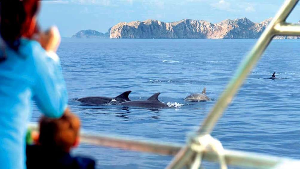 Foto 2 von 5 laden Boat whale watching