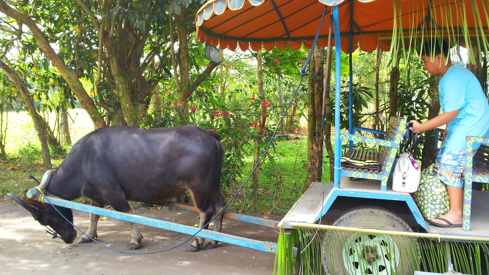 animal towing cart in manila