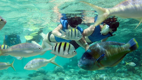 Fish on the snorkeling adventure in Puerto Plata, Dominican Republic