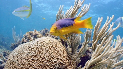Coral reef and fish in Punta Cana