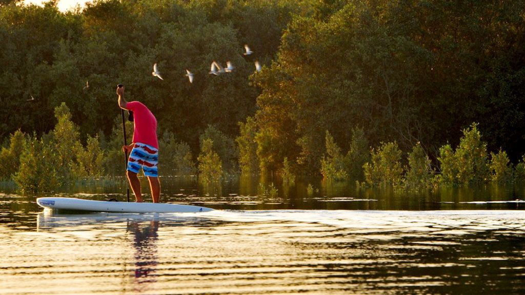 Guided Mangrove Stand-Up Paddleboarding Tour