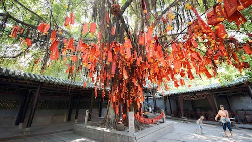 Stunning tree on the Kungfu Tour in Bruce Lees Hometown