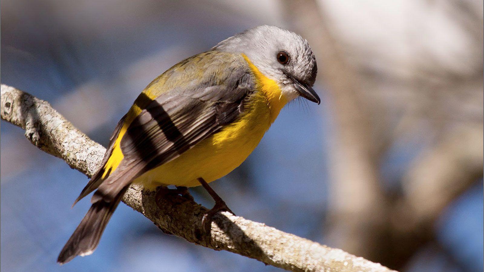 Cute bird on the Noosa Everglades in Costa Rica