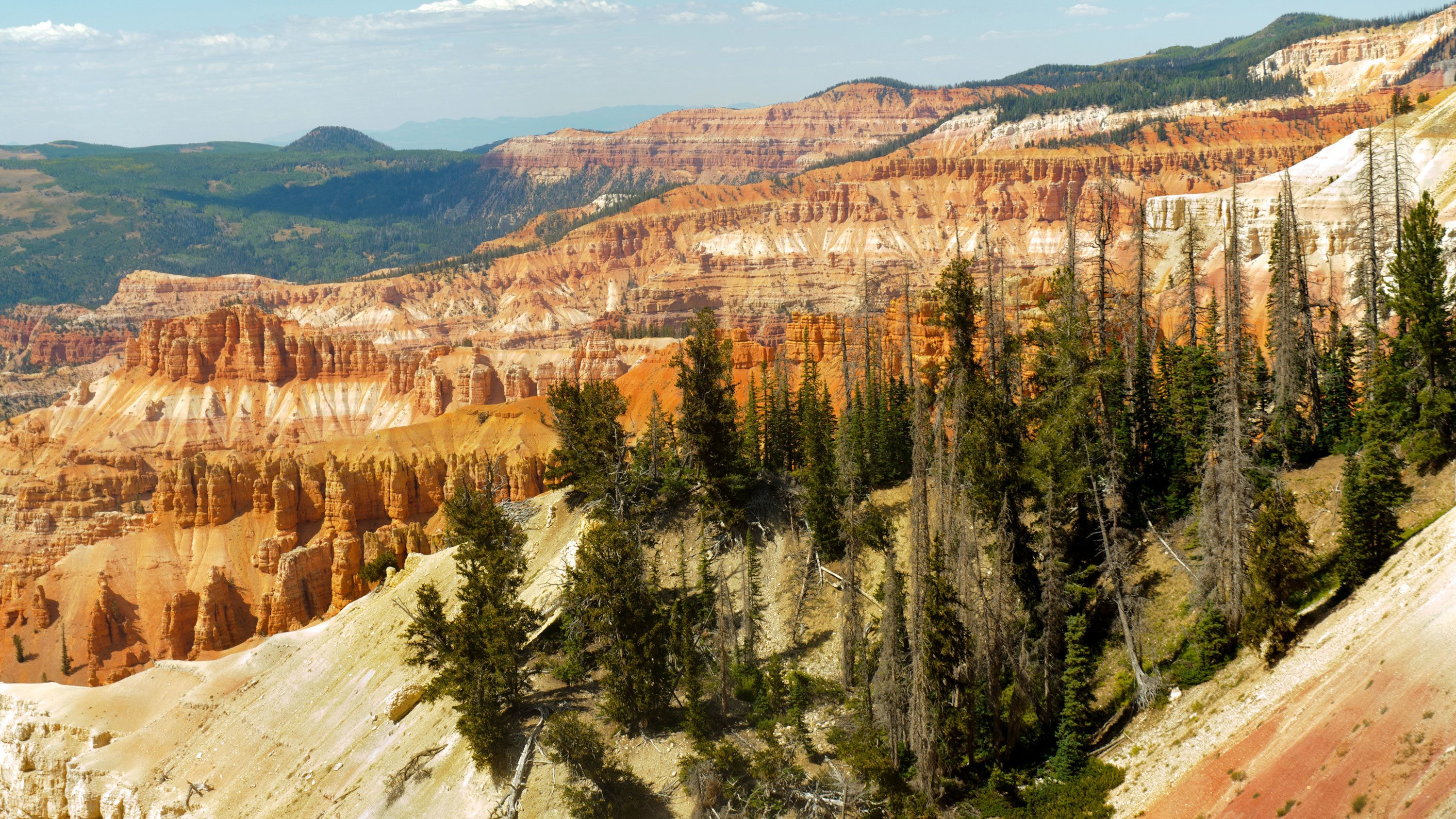 Trees and colorful cliffs of the Grand Canyon