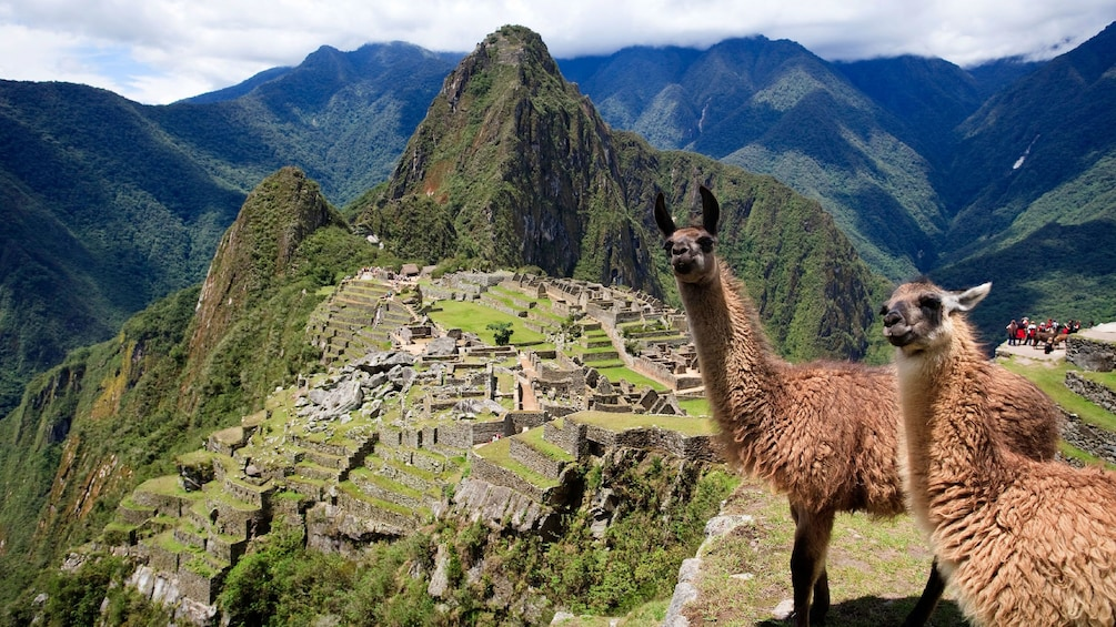 Show item 3 of 7. Pair of llamas on a cliff overlooking ruins in the mountains of Peru