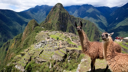 Pair of llamas on a cliff overlooking ruins in the mountains of Peru