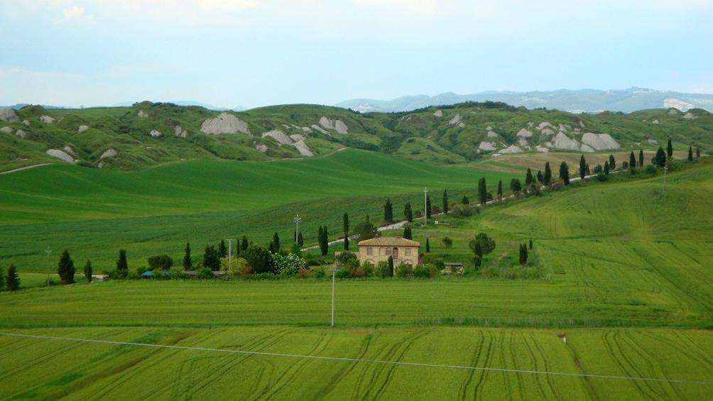 Apri foto 4 di 8. Vineyard in Tuscany
