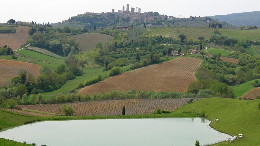 Apri foto 3 di 8. Rolling hills of vineyards in Tuscany