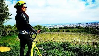 Small-Group Wachau Valley Bike Tour with Wine Tasting