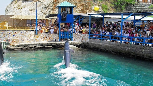 Dolphin show at the Aquarium Tour in Santa Marta