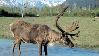 Alaska Wildlife Conservation Center & Turnagain Arm Tour