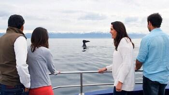 3-Day Christchurch & Kaikoura Whale Watching Tour