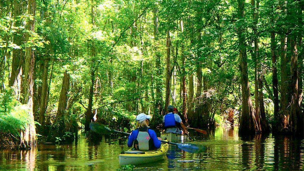 Serene views on the Kayak Adventure Tour in Orlando