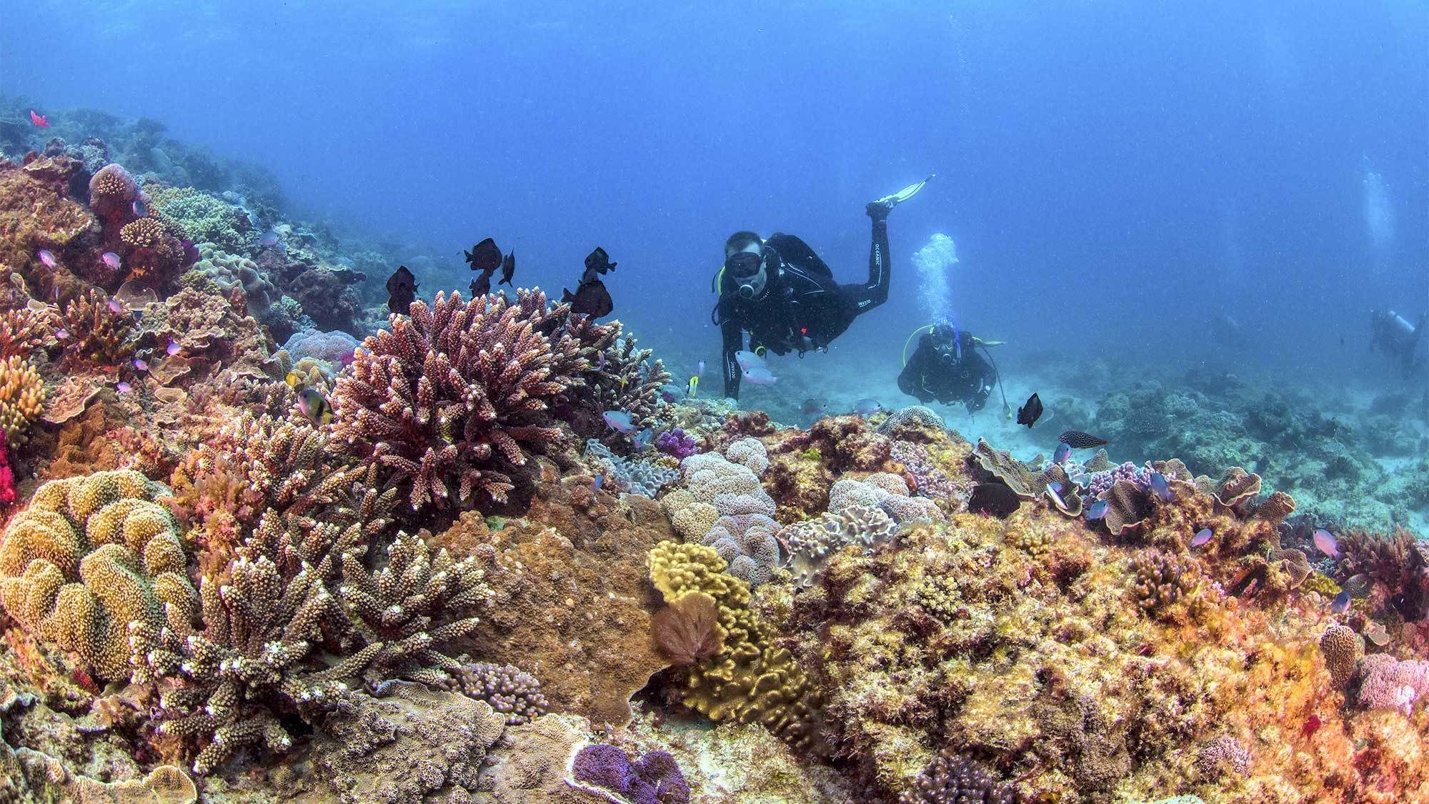 Full-Day Flinders Reef Scuba Diving Adventure