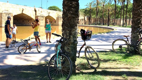 Bicycles placed against tree in Valencia