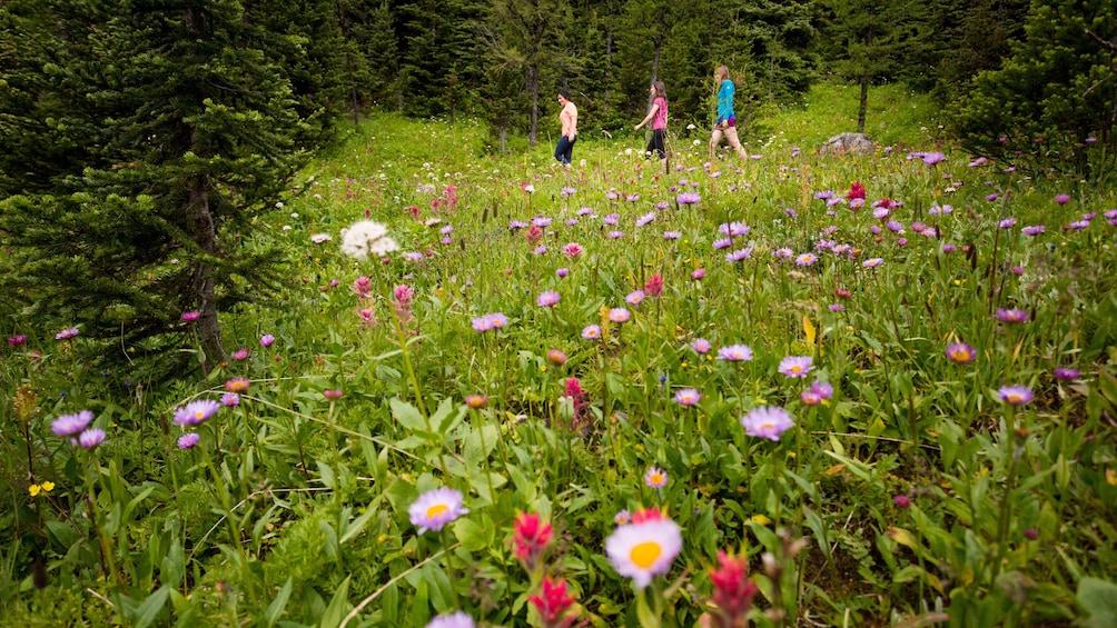 Foto 4 von 4 laden Trio walking through a field of wild flowers in Banff