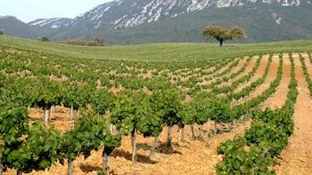 Ganztägige private Tour nach Arrábida und ins Weingebiet Azeitão