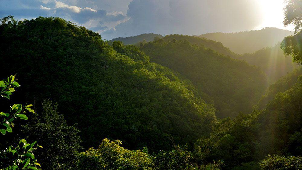 Blue Mountain Hike & Coffee Tour