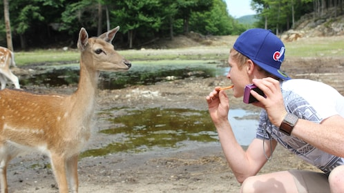 A man feeding a deer a carrot