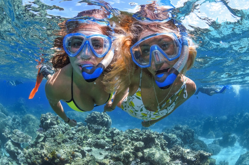 Show item 3 of 9. Outer Great Barrier Reef Cruise & Diving Tour with Lunch