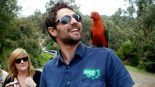 Tour guide with red bird on his shoulder