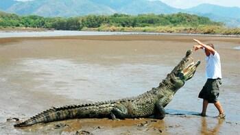 Tarcoles River Tour