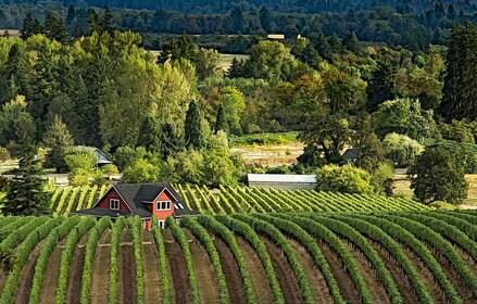 Wine Country cred S.Sund.jpg
