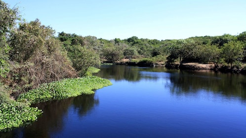 Lush forest along the water in Coyuca Lagoon
