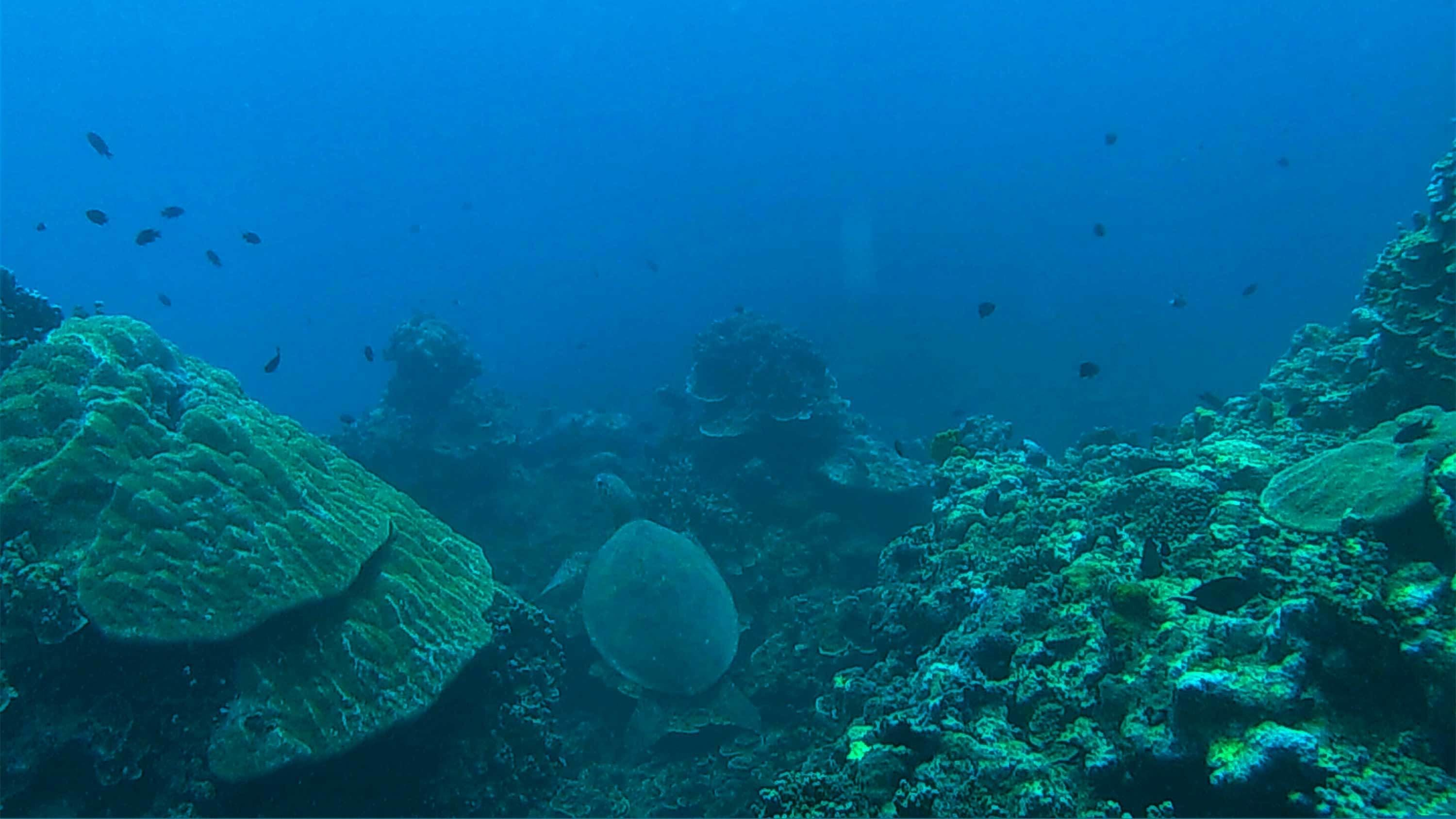View under the sea at Forgotten Bay in Samoa