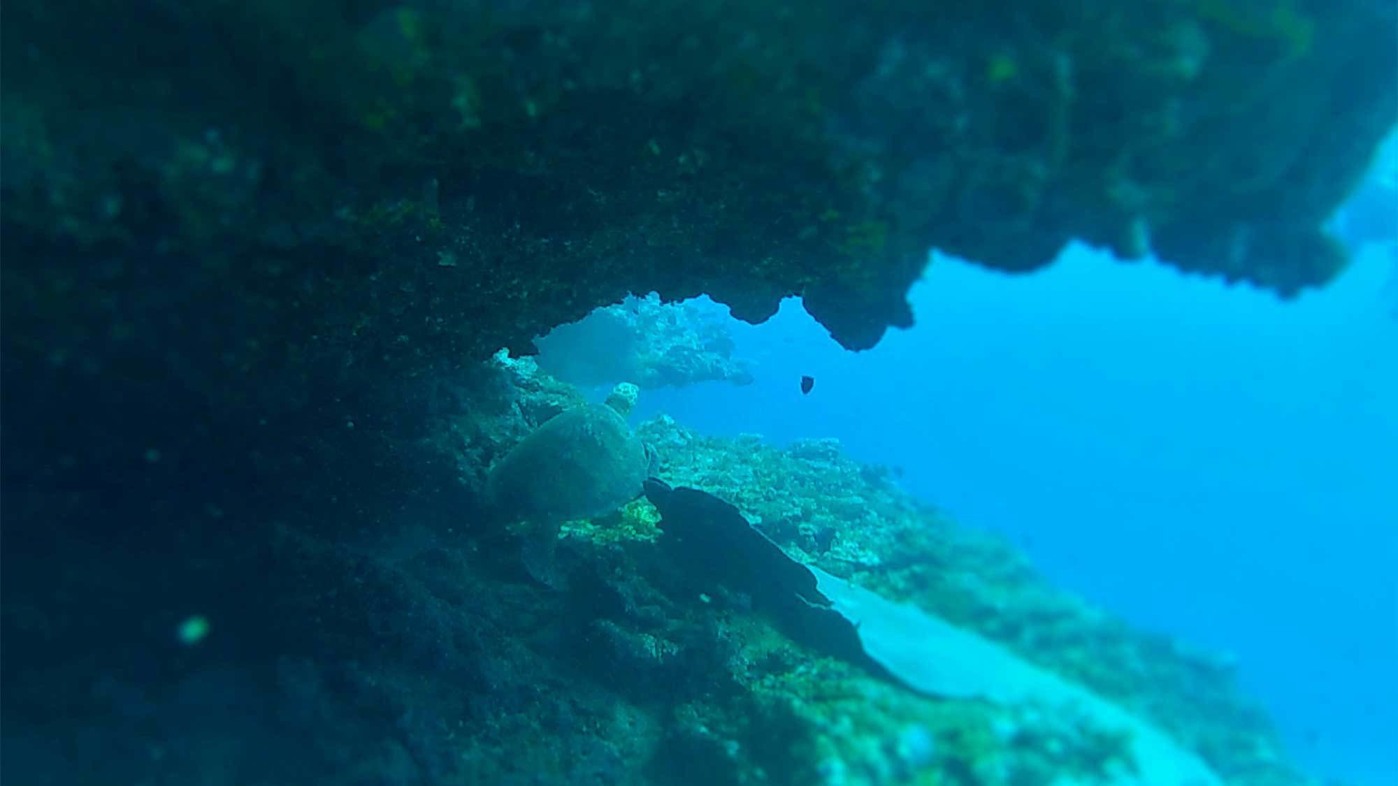View underwater at Forgotten Bay in Samoa