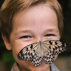 Butterfly Palace and Rainforest Adventure