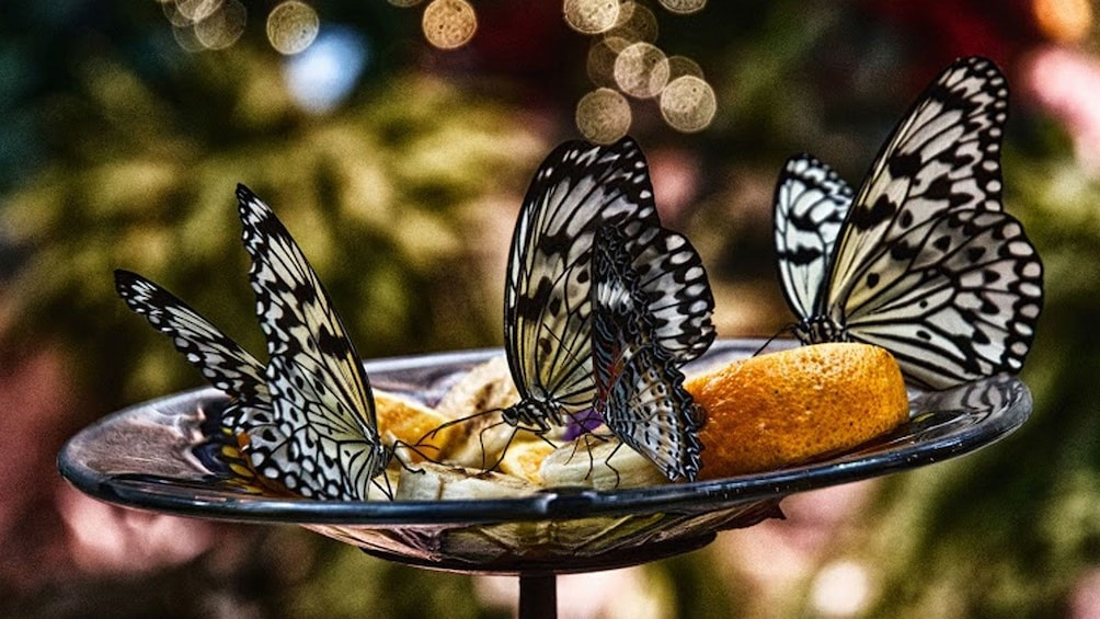 Butterflies at Butterfly Palace in Branson