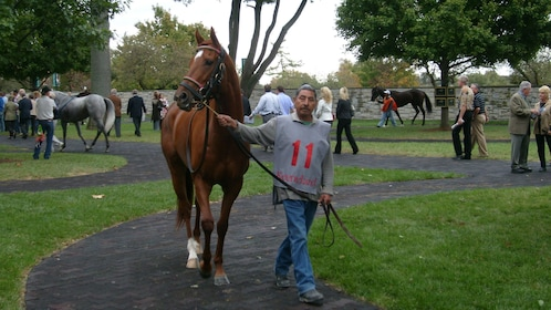 Man leading a horse on a path in Kentucky