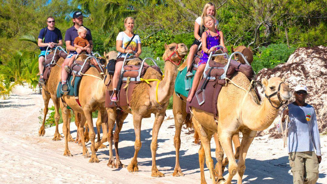 A camel safari tour in Cancun