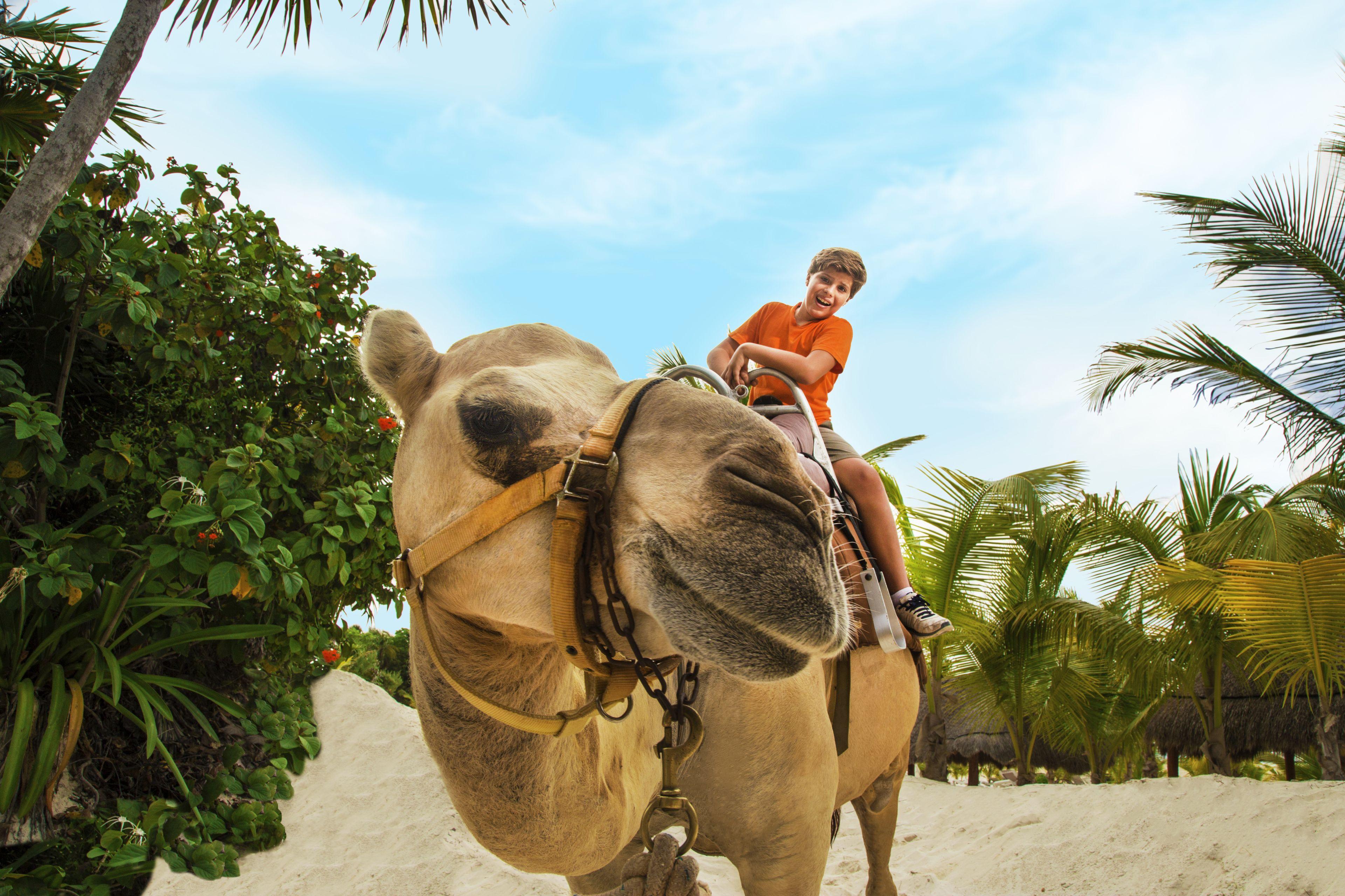 niño-Camel1.jpg