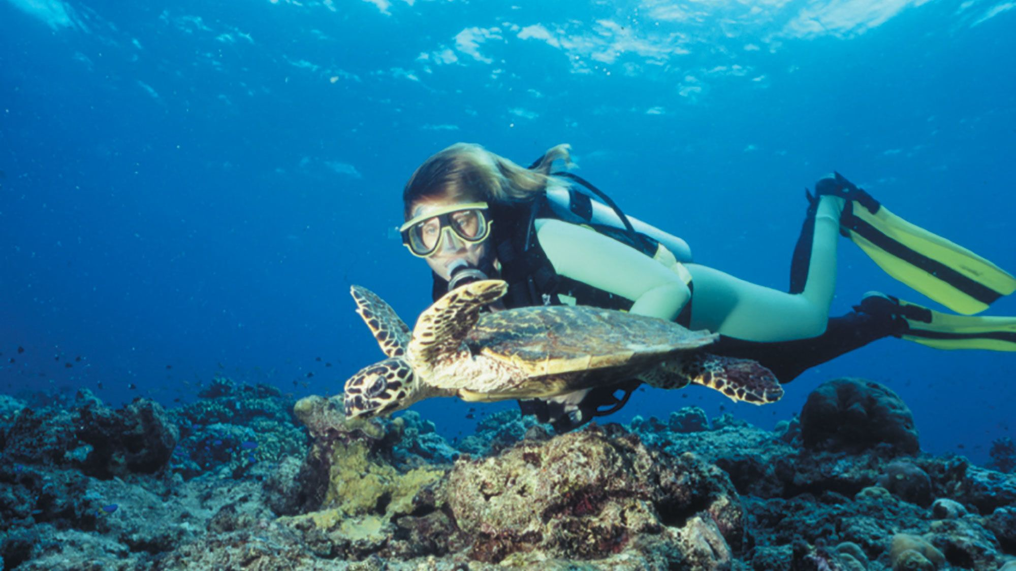 young female in scuba equipment swims next to sea turtle in Gold Coast