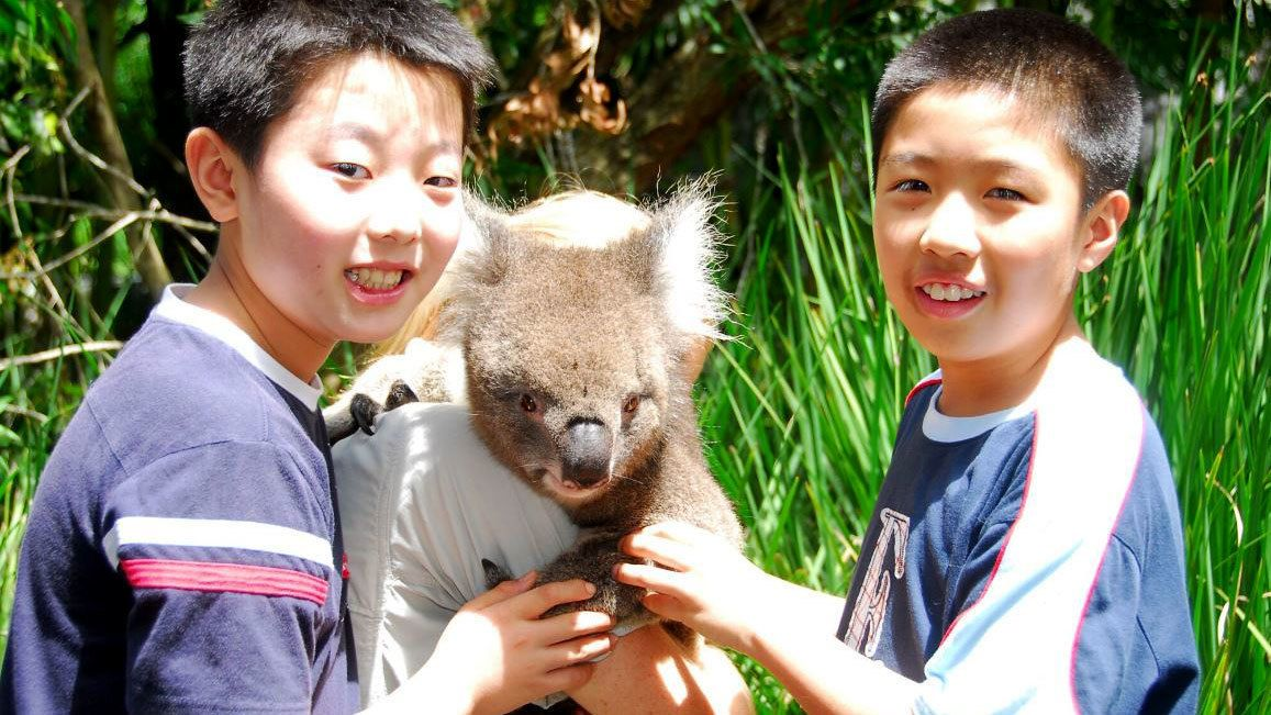 Australia Zoo Full Day Tour from Brisbane
