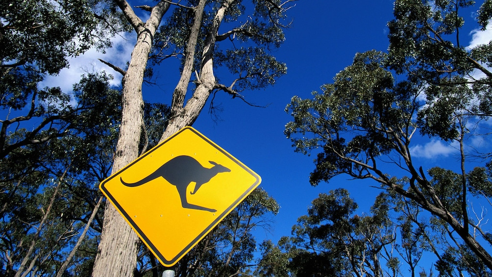 Kangaroo crossing sign found in Blue Mountain Wildlife Park in Sydney