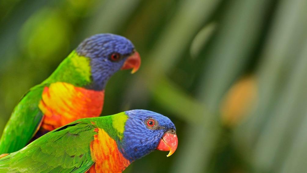 Parrots found in Blue Mountain Wildlife Park in Sydney