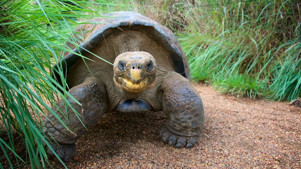 Tortoise at Hunter Valley Reptile Park