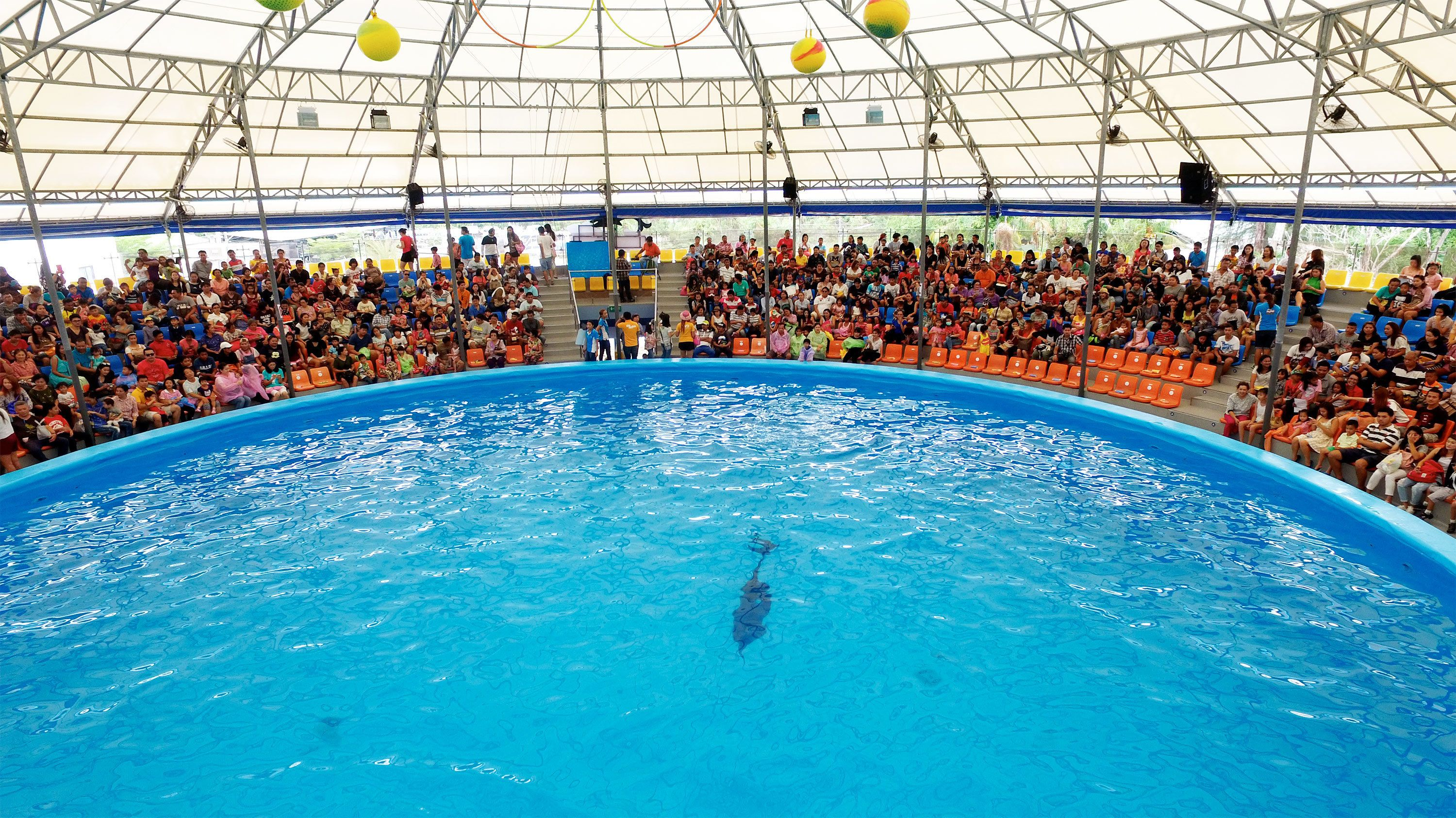 View of the Dolphin Show in Phuket