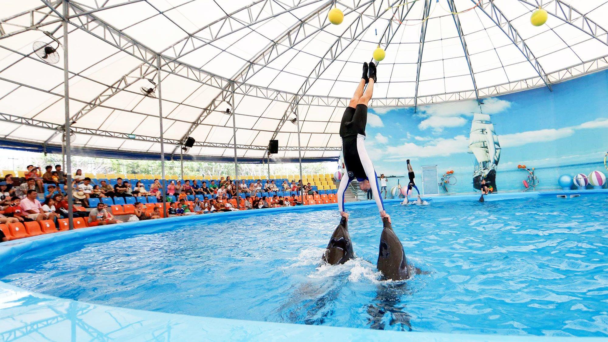 Dolphin Show in Phuket