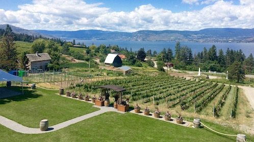 Vineyard view on the Deluxe Wine Tour in Vancouver BC
