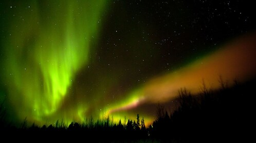 Green and orange northern lights over the trees in Lapland