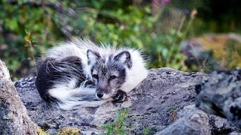 Arctic Zoo, Tag im Ranua Wildlife Park
