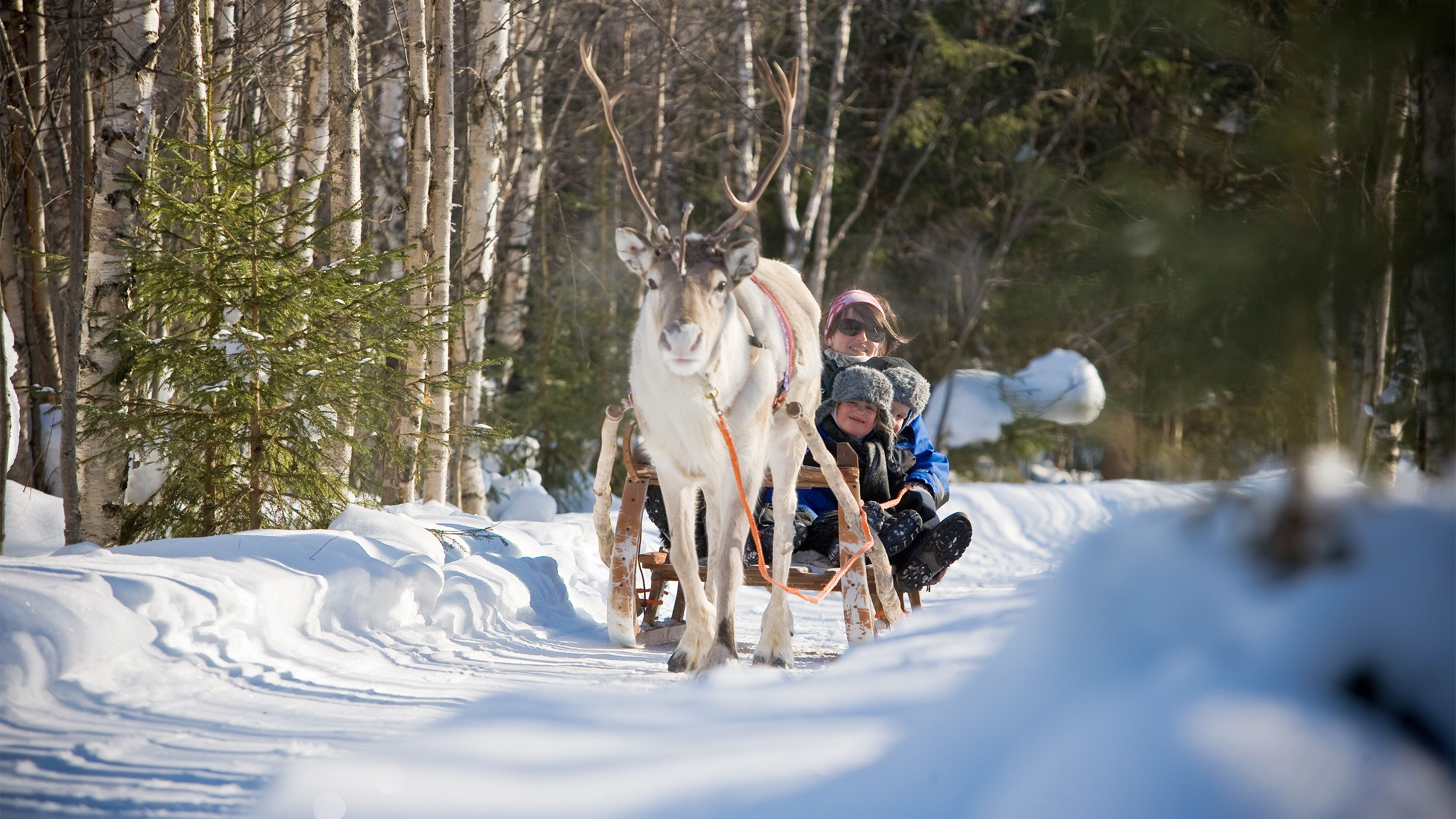 Family sledding with a reindeer in Lapland