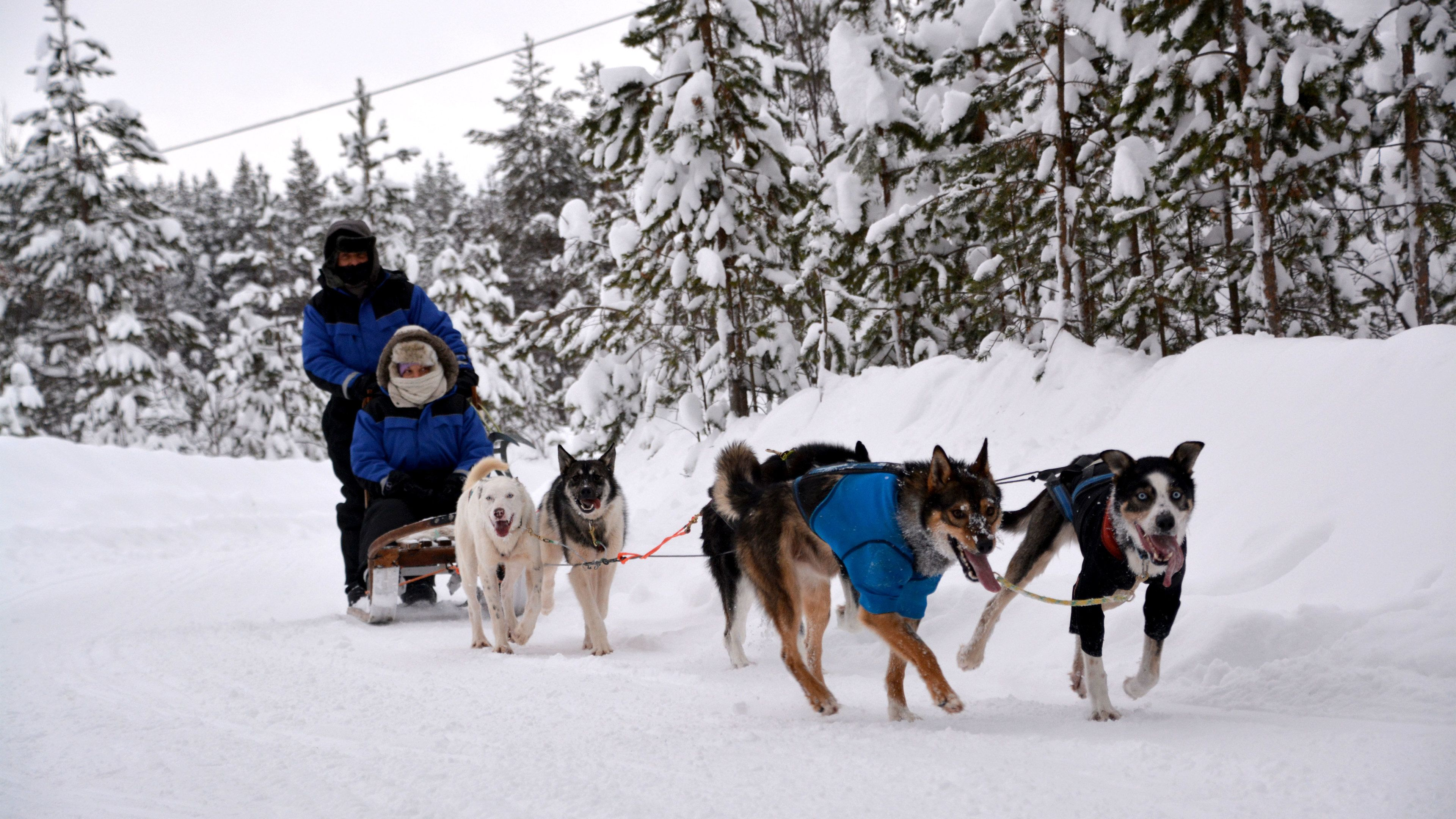 Couple on a dog sled tour in Stockholm