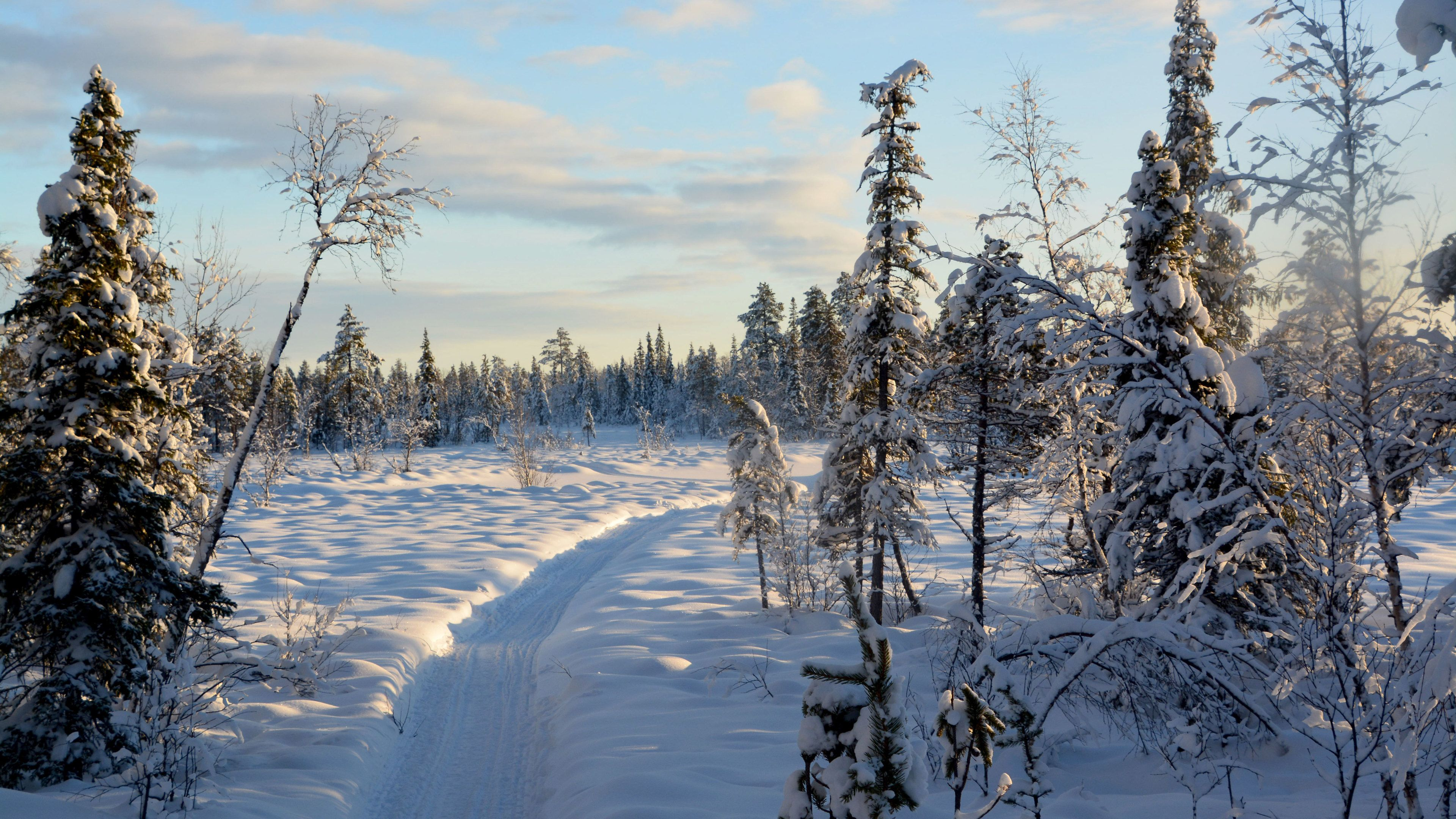 Path through the snowy forest in Stockholm