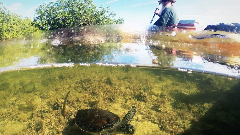 Show item 5 of 5. Kayakers view sea turtle below the surface in Florida Keys